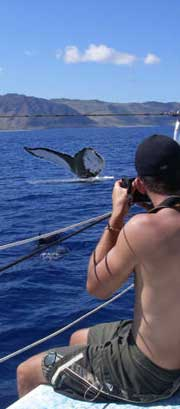 whale watching Oahu Hawaii