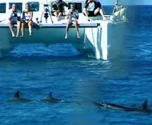dolphins crossing bow of catamaran