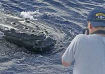 getting 'mugged' by a himpback whale