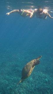 Guided Reef Snorkel Oahu Hawaii