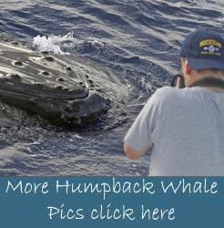whale watching oahu hawaii Maui county