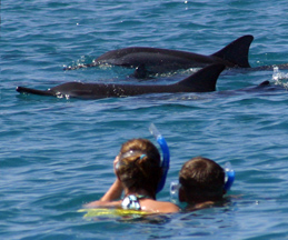 swimming with dolphins hawaii