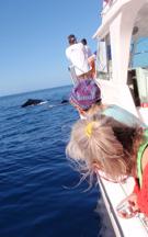 whale watching hawaii